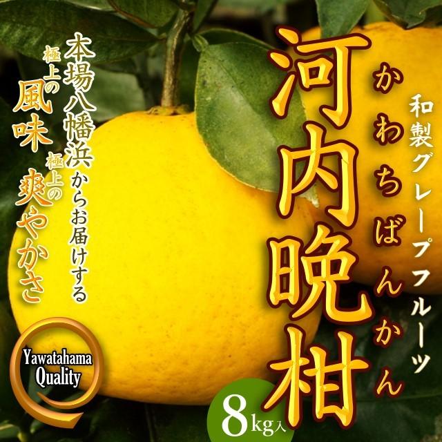 """""""和製グレープフルーツ"""" 極上の爽やかさ「河内晩柑」8kg入"""