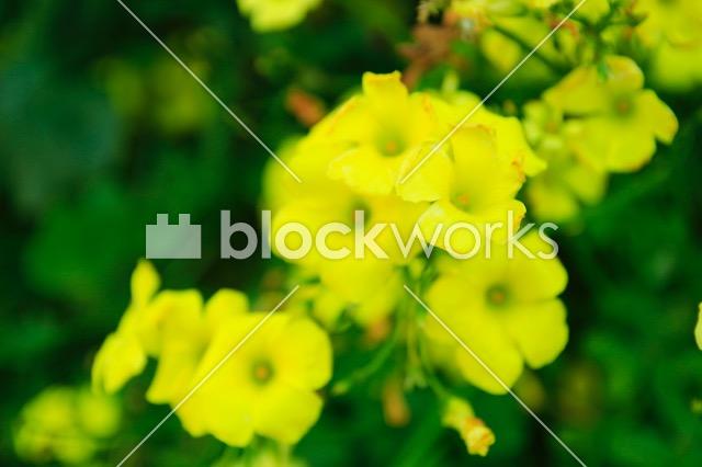 写真素材:春の花001 - 画像1