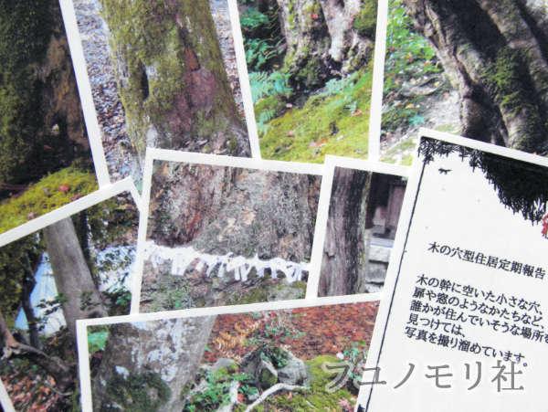 カード集 - 木の穴型住居定期報告(3) - フユノモリ社