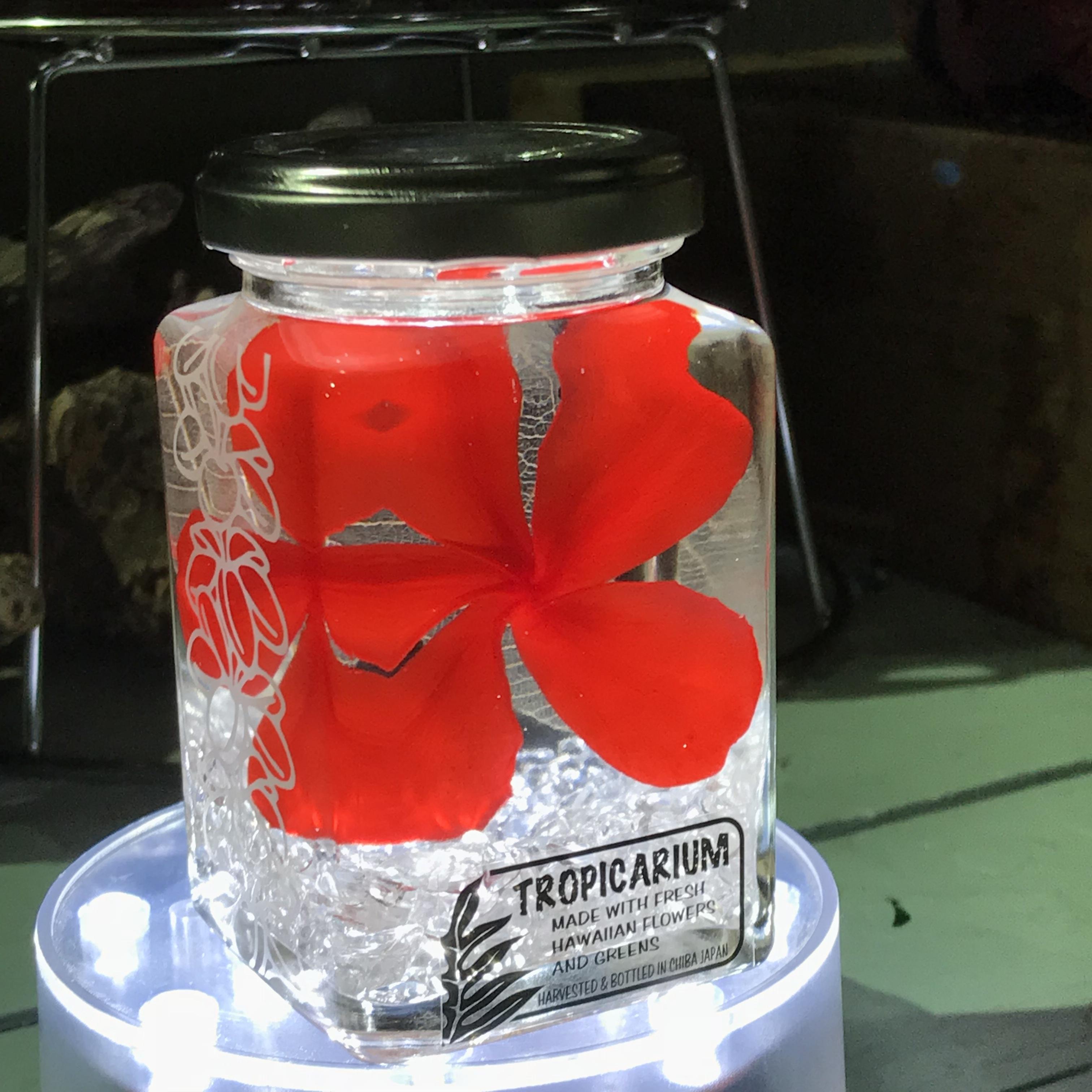 【Hawaiianpaint KANボトル】幸福を呼ぶプルメリアのトロピカリウム レッド・水晶(スタッキングボトル・プリザーブド・クリスタルクオーツ使用)
