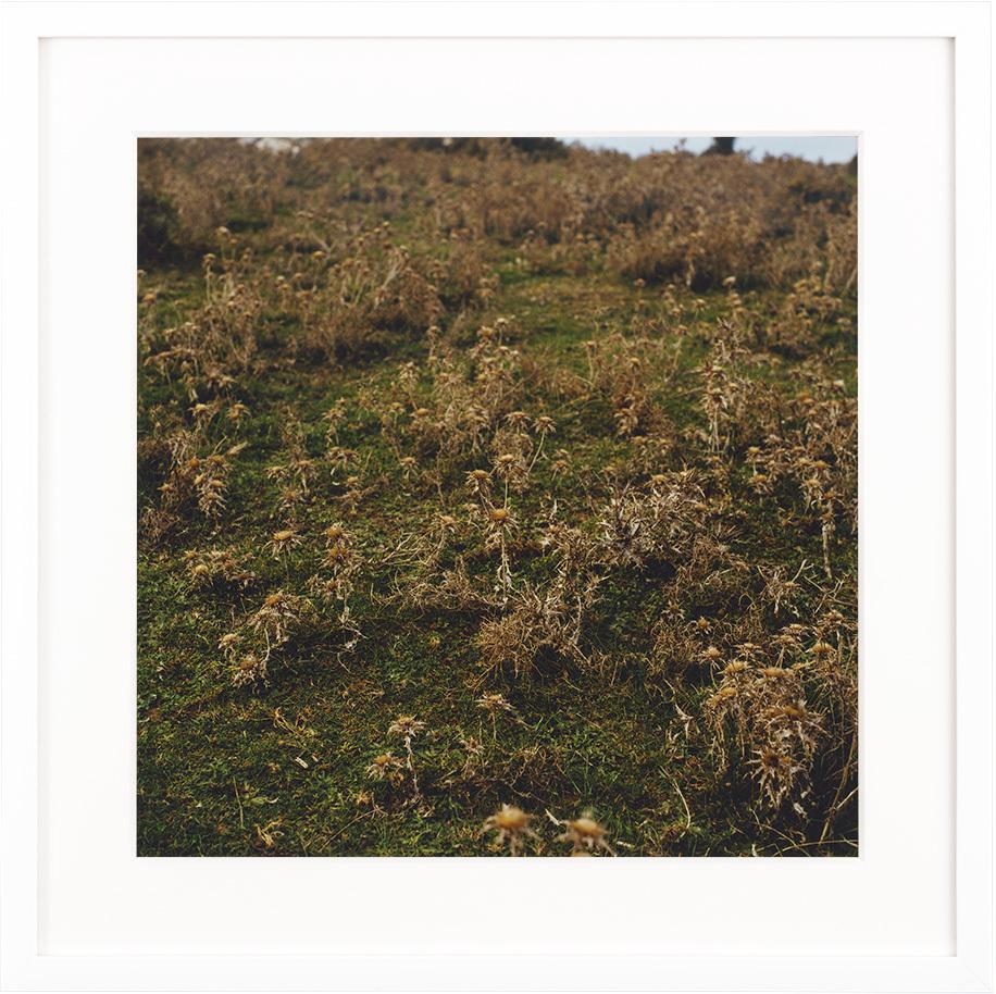 牧場の秋 #1