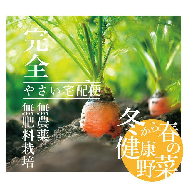 【送料無料*一部地域を除く】無農薬・無肥料栽培 冬から春の健康野菜 根菜セット