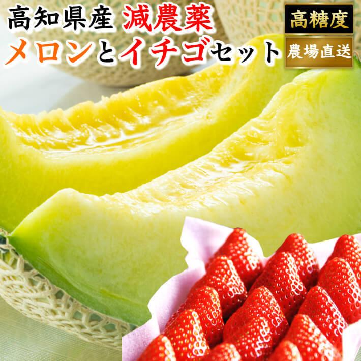 高知県産 マスクメロン イチゴセット 大玉 お取り寄せ お歳暮 贈答 高級 ギフト フルーツ 果物 送料無料