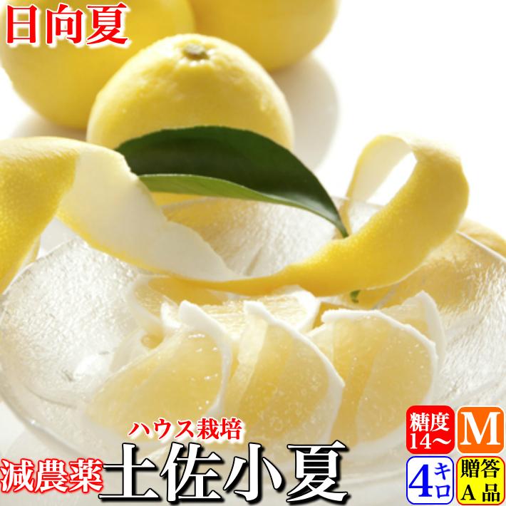 糖度14度 高知県山北産 減農薬ハウス小夏 4kg 日向夏 贈答用 Mサイズ 送料無料 クール便