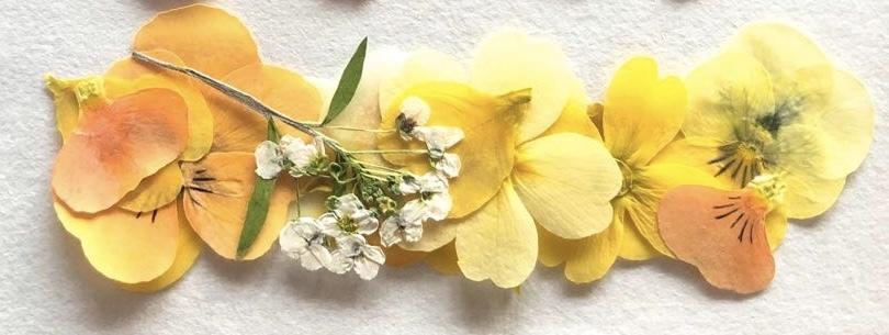 業務用パック DRY EDIBLE FLOWER[ yellow mix ]