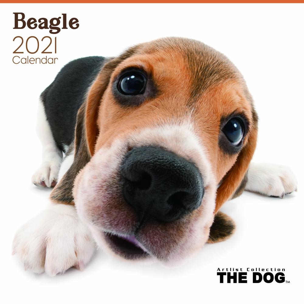 2021年 THE DOGカレンダー【大判サイズ】ビーグル