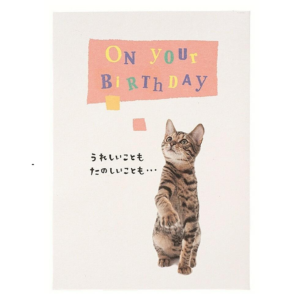 猫立体カード(うれしいこともハッピーバスデー)