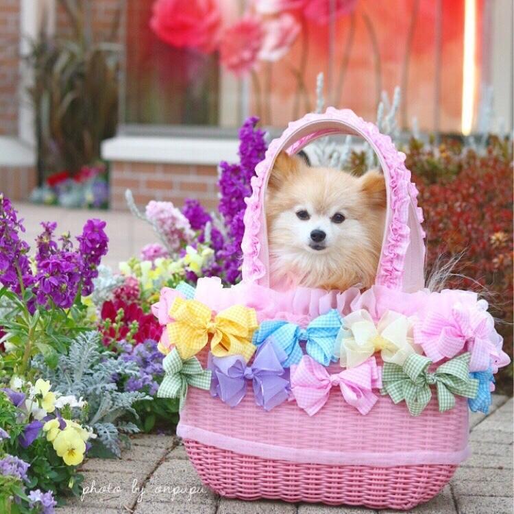 3kgサイズ ドッグキャリー リボン付きカゴバッグ ♡おんぷちゃんのメルヘンピンク♡