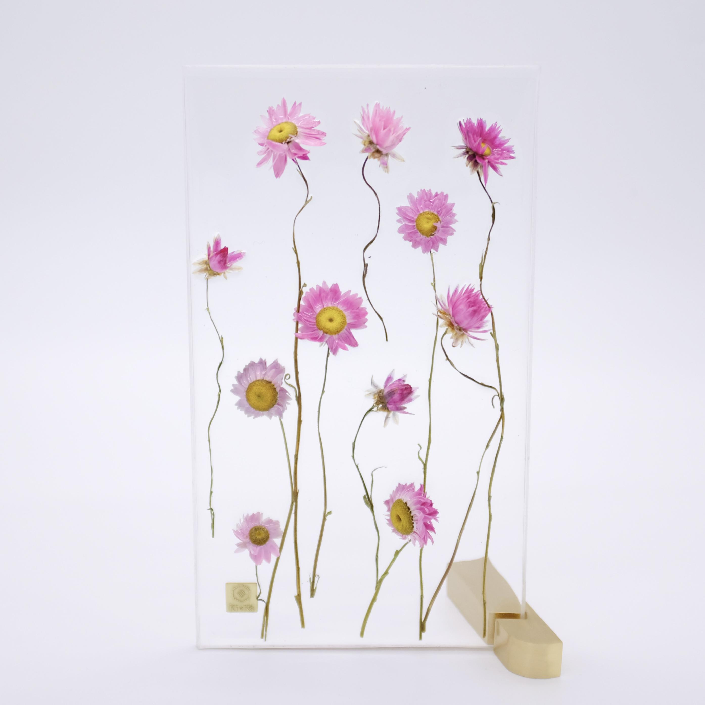 dried flower M ローダンセ 1