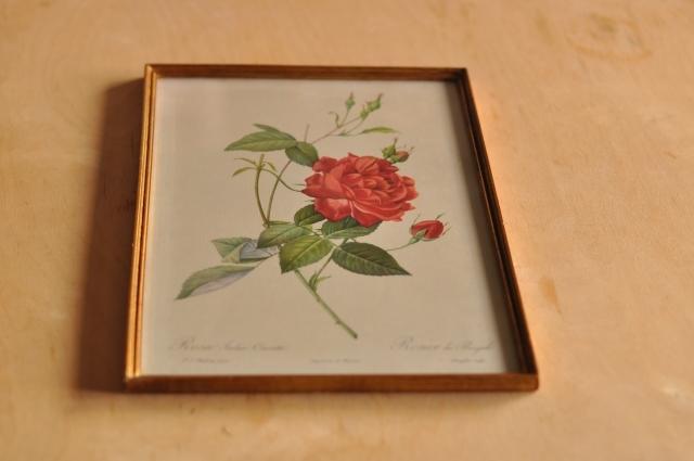 額装された薔薇の博物画
