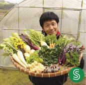 季節のお野菜 おまかせボックスSサイズ