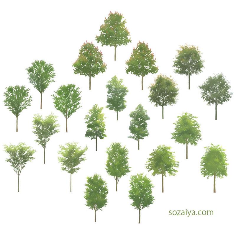 樹木イラストSketchUp 4b_002 - 画像2