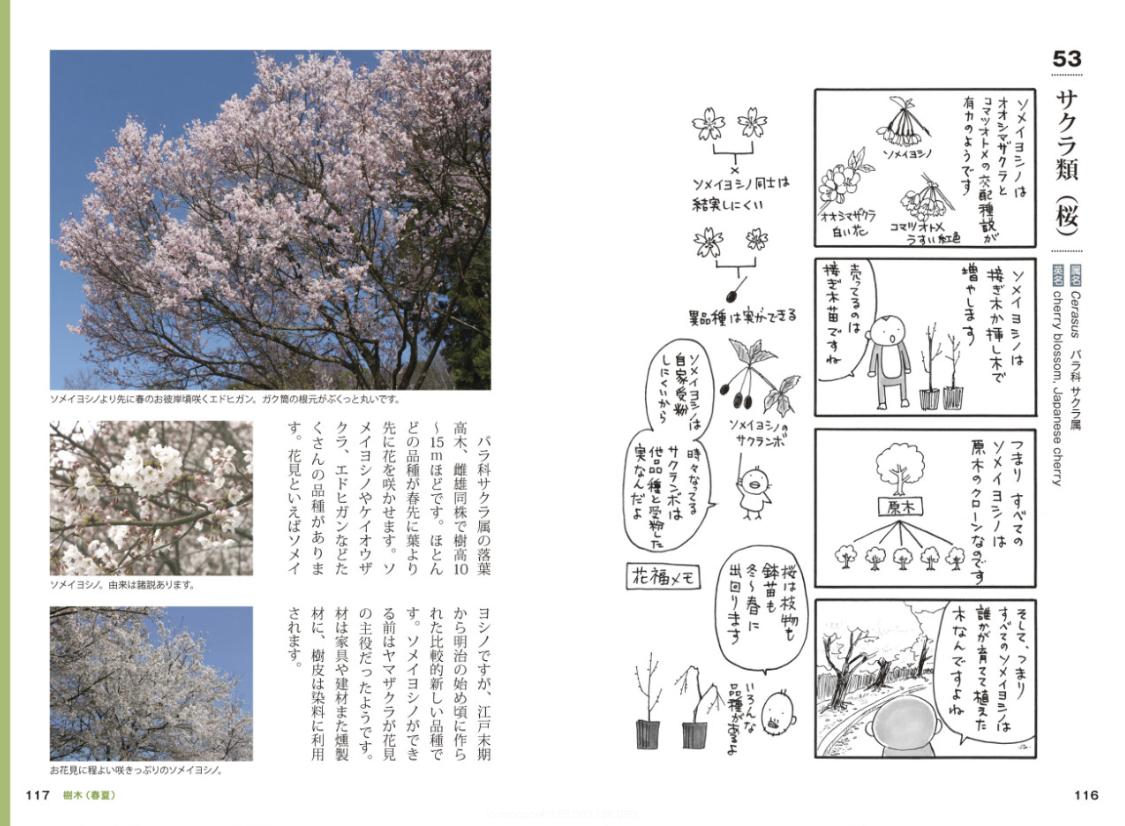 [書籍]『おもしろ植物図鑑』 - 画像4