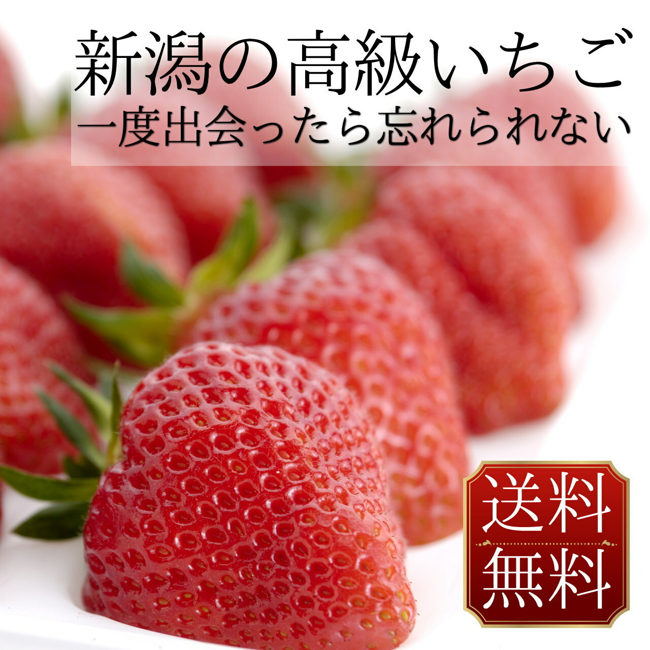 いちご 越後姫 通販 送料無料 新潟のブランドイチゴ 800g 30粒入