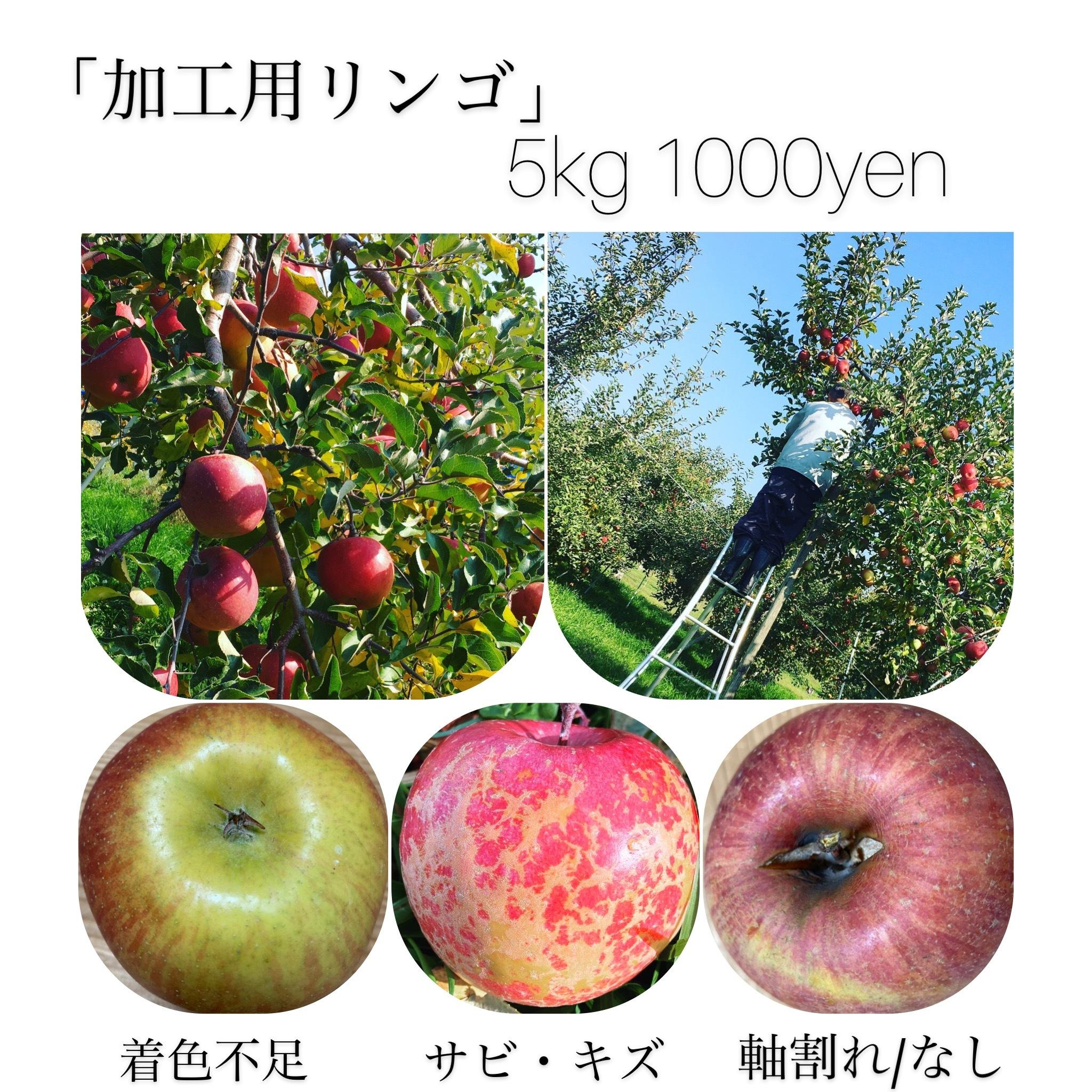 【加工用】ふじ5kg