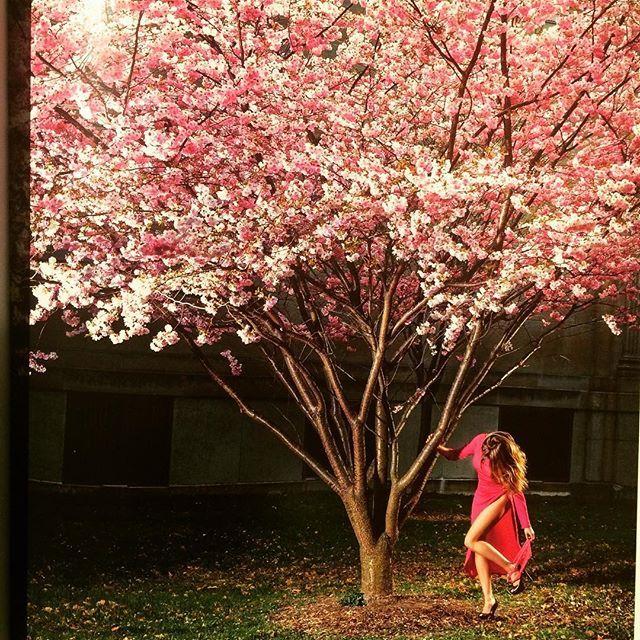 写真集「Beautiful Disasters/David Drebin」 - 画像2