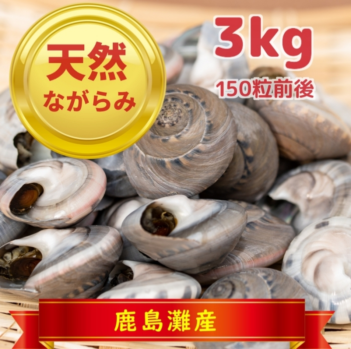 天然ながらみ 3kg(鹿島灘・九十九里浜産 冷凍)