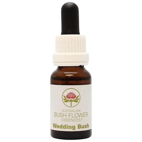 ウェディングブッシュ[Wedding Bush]