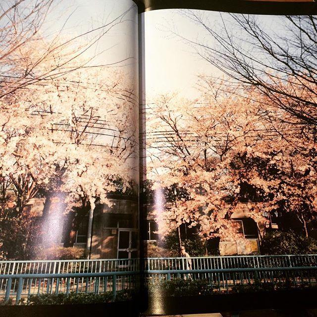 ヒロミックス写真集「光/HIROMIX」 - 画像2