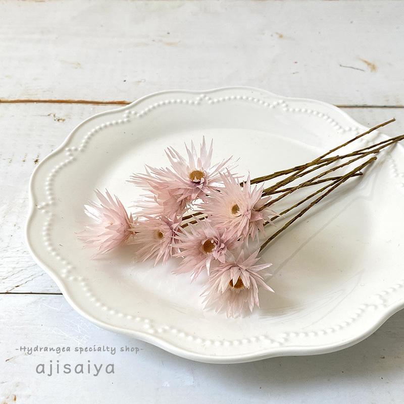 つんつんお花がかわいい シャイニーホワイト ピンク <ドライフラワー>
