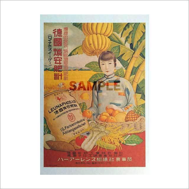 台湾ポストカード 「徳国燐安肥料」