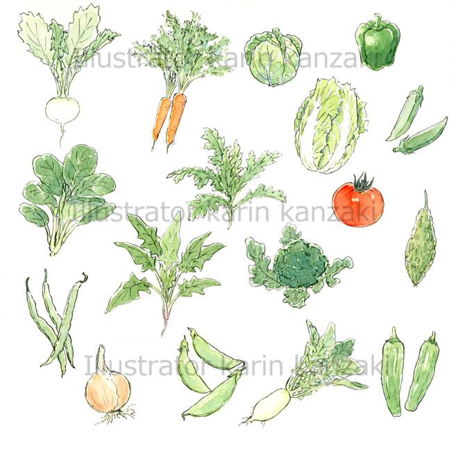 野菜 イラストフリー素材 水彩画 350dpi イラストレーター直営フリー