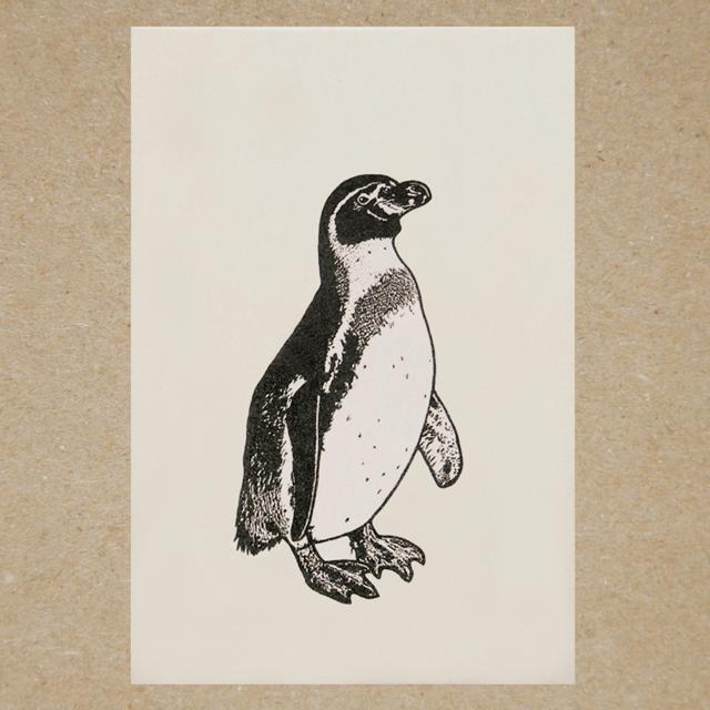 ポストカード(ペンギン)