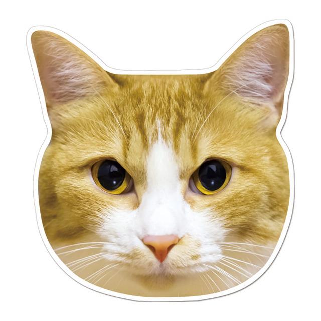 【セール】 (77chashiro) ケーマグ 実物大? 茶白猫 マグネット ステッカー 【レターパックライト可】
