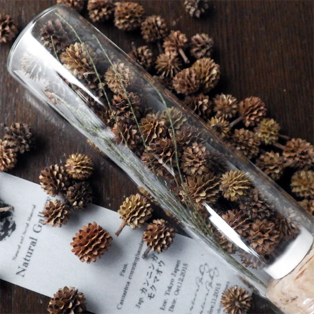 "Seed mania bottle ""Casuarina"""