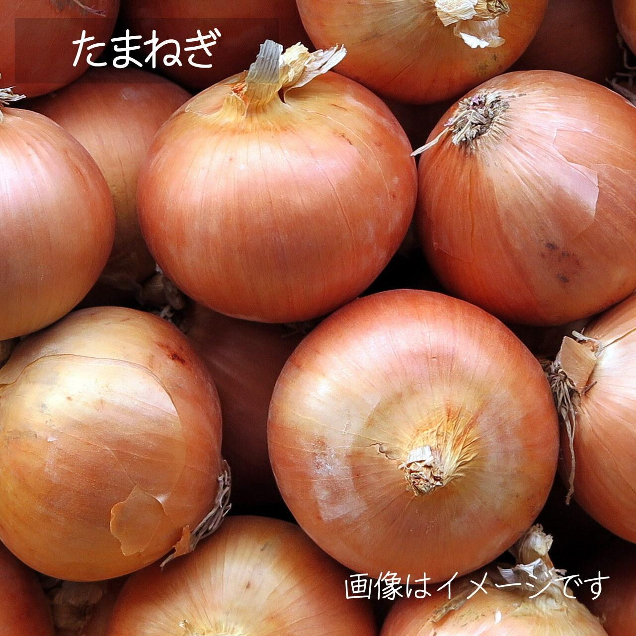 新鮮な夏野菜 : たまねぎ 約3~4個 8月の朝採り直売野菜 8月31日発送予定