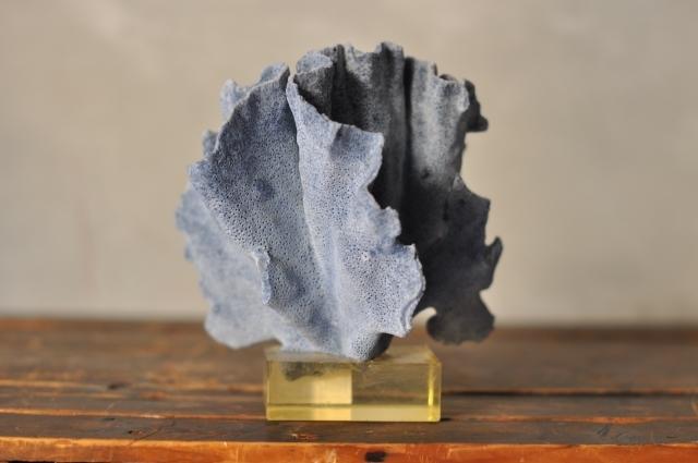 アクリル台の青珊瑚