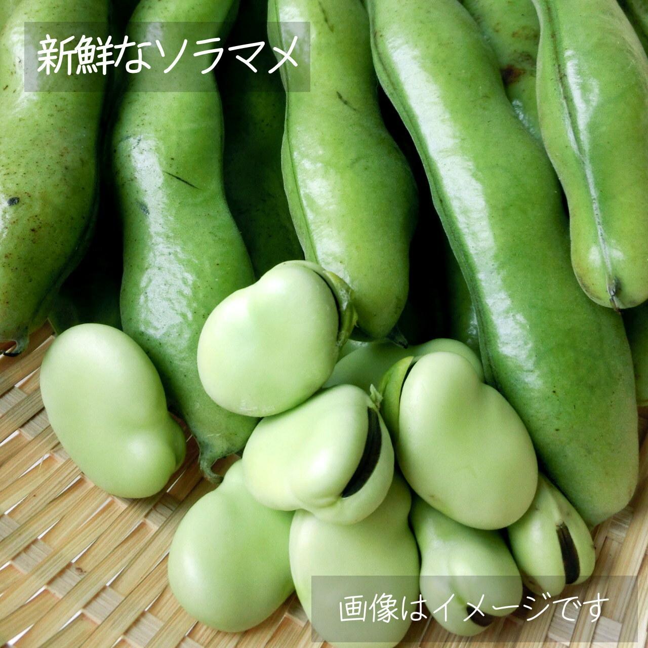 そらまめ 約400g: 6月の朝採り直売野菜 6月1日発送予定