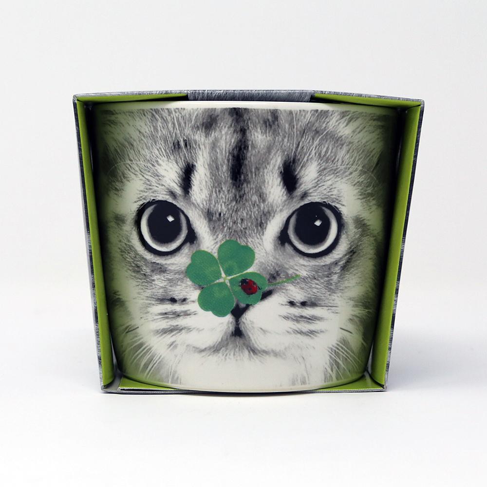 猫四つ葉のクローバー栽培キット(ハナアニマルズ)