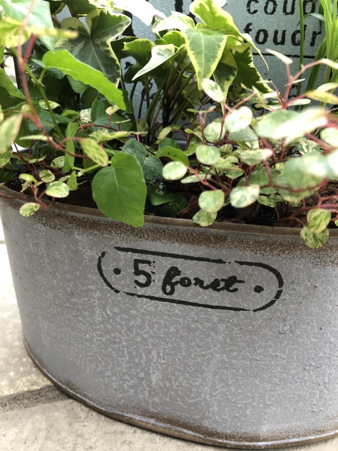 グリーンプランツ寄せ植え