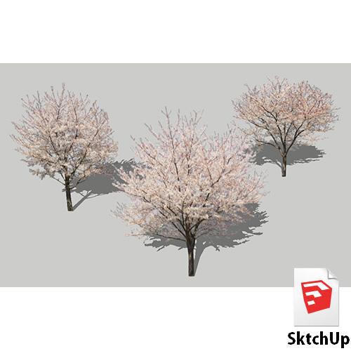 樹木SketchUp 4t_009 - 画像1