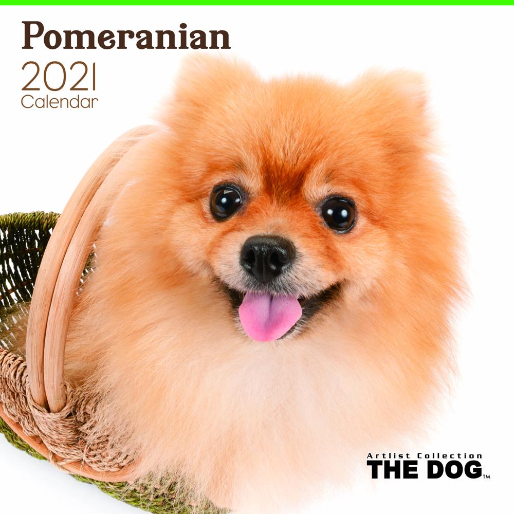 2021年 THE DOGカレンダー【大判サイズ】ポメラニアン