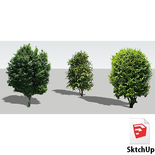 樹木SketchUp 4t_008 - 画像1