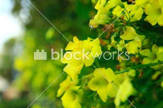 写真素材:春の花004 - 画像1