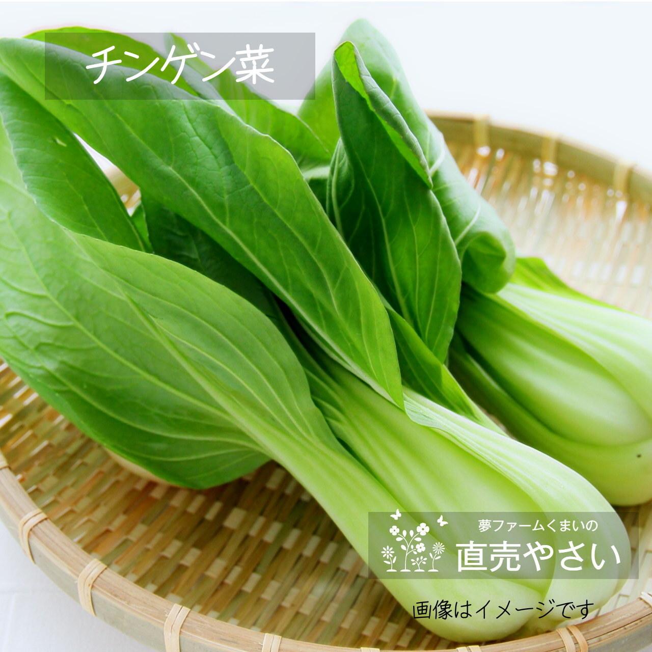チンゲン菜 約180g前後 2~4株: 5月の朝採り直売野菜 春の新鮮野菜  5月16日発送予定