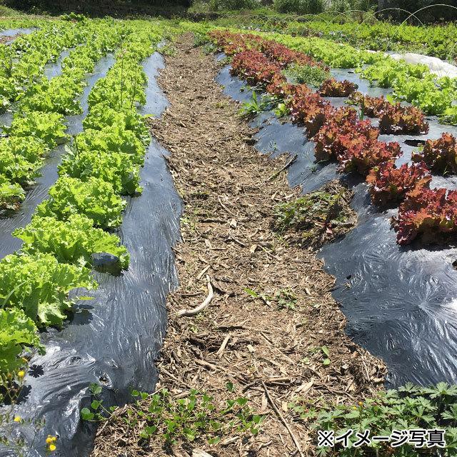 【定期便(3回)】沖縄産無農薬野菜セット(S) - 画像3