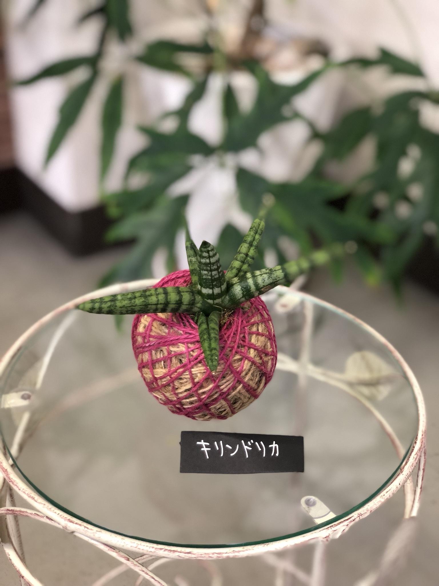 サンセベリア・プレミアム -苔玉 - made by Heartflower