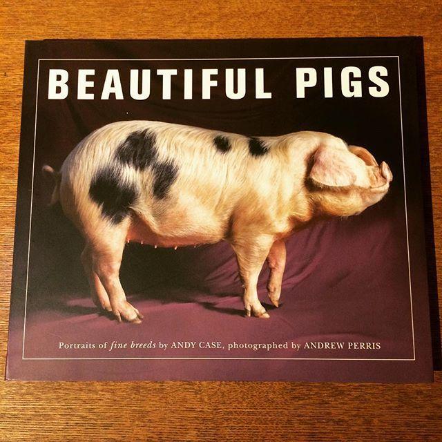 写真集「Beautiful Pigs」 - 画像1