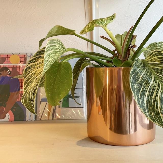 Raakel Cylinder φ15cm×h15cm copper 植木鉢カバー