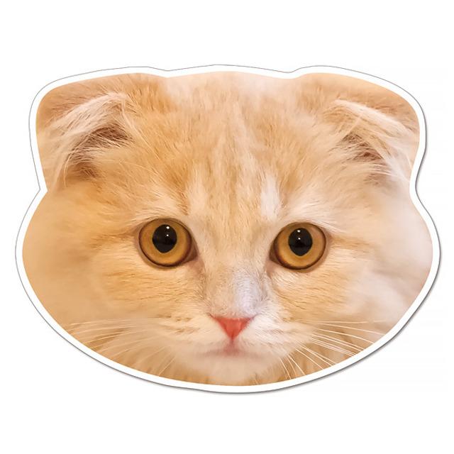 【セール】 (77suko) ケーマグ 実物大? スコティッシュフォールド マグネット ステッカー 猫顔 【レターパックライト可】