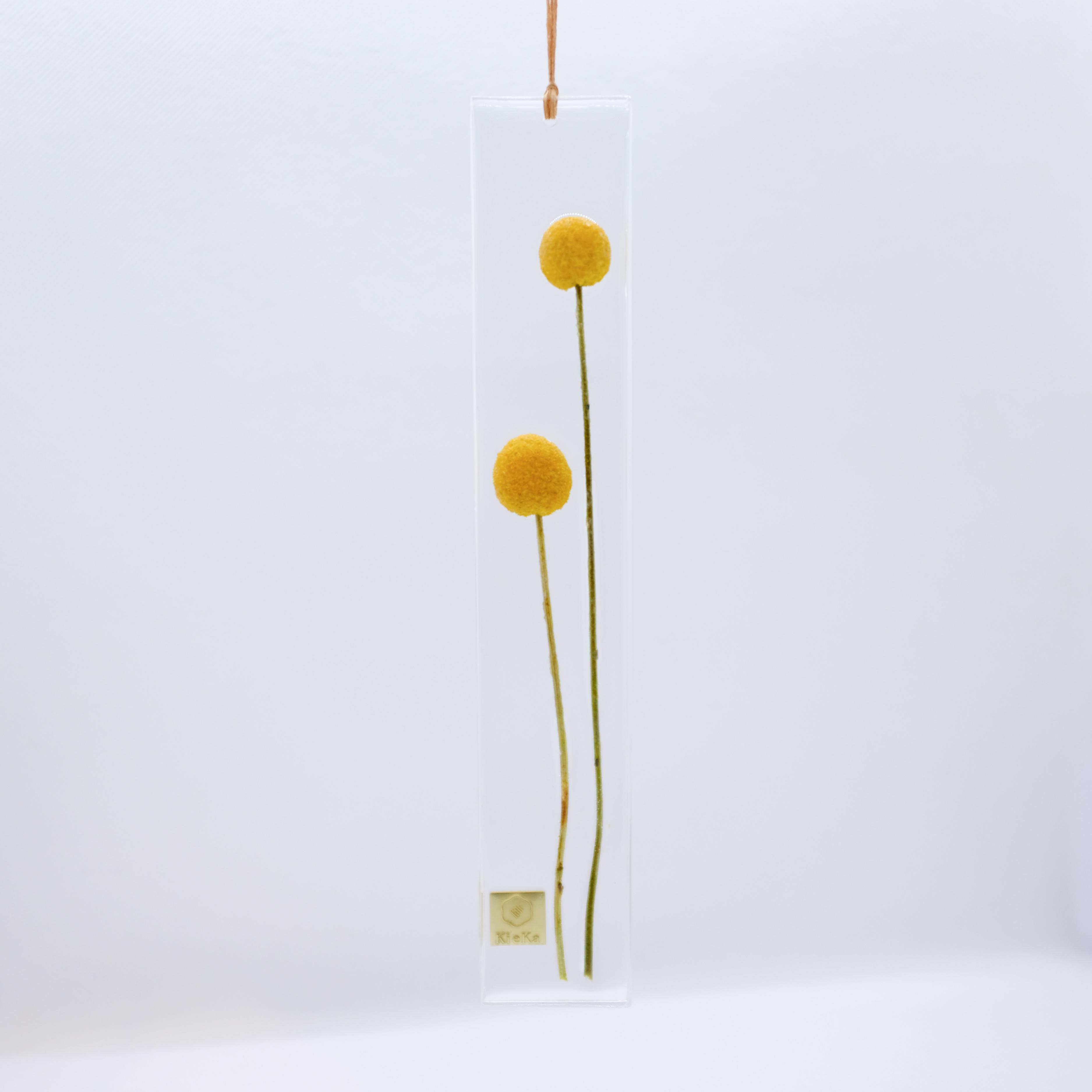 dried flower S クラスペディア