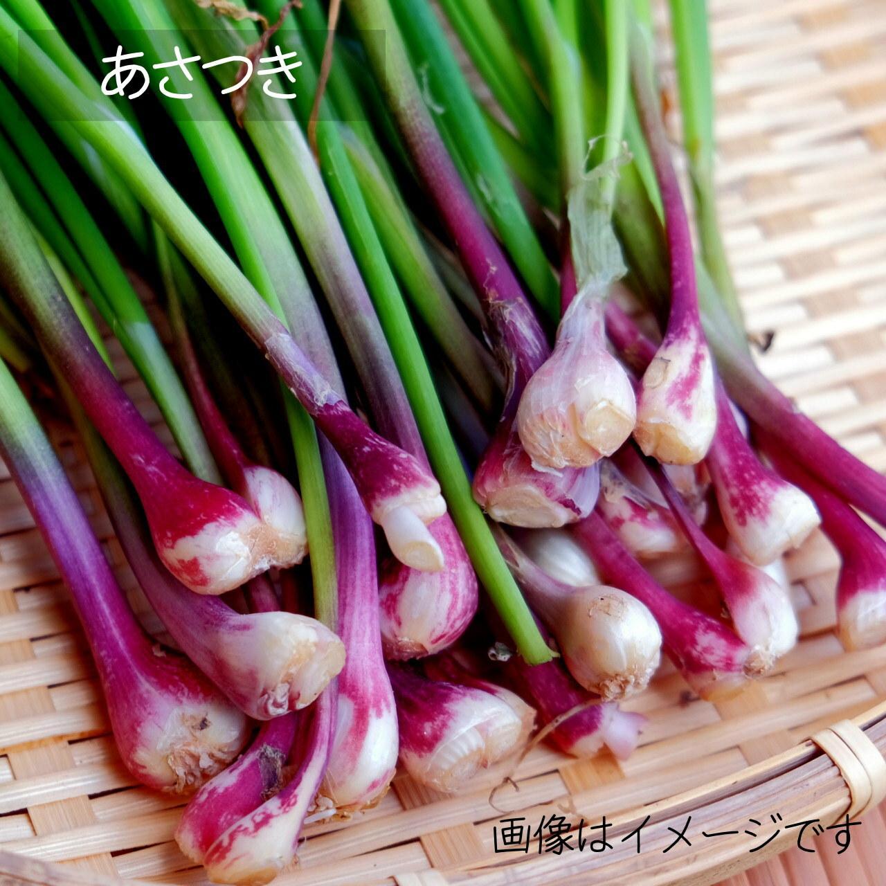 あさつき 5月の朝採り直売野菜 春の新鮮野菜 5月16日発送予定