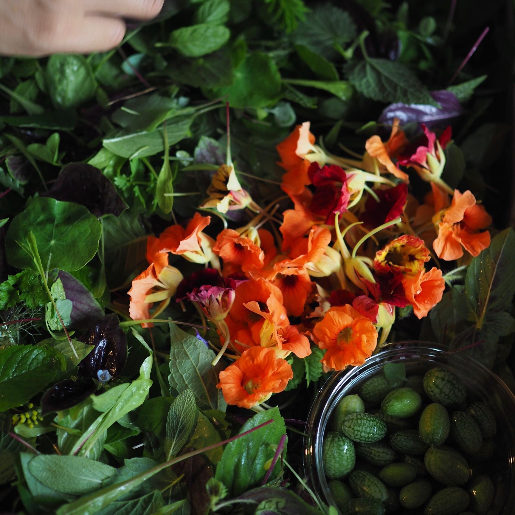 Wild Leaf Salads  ワイルドリーフサラダ