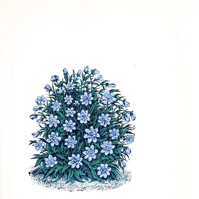 Flora | Marihiko Hara