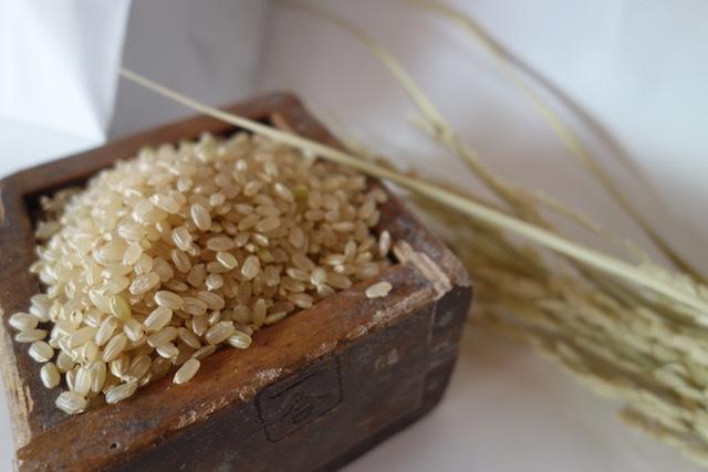 ひのひかり 玄米 5kg