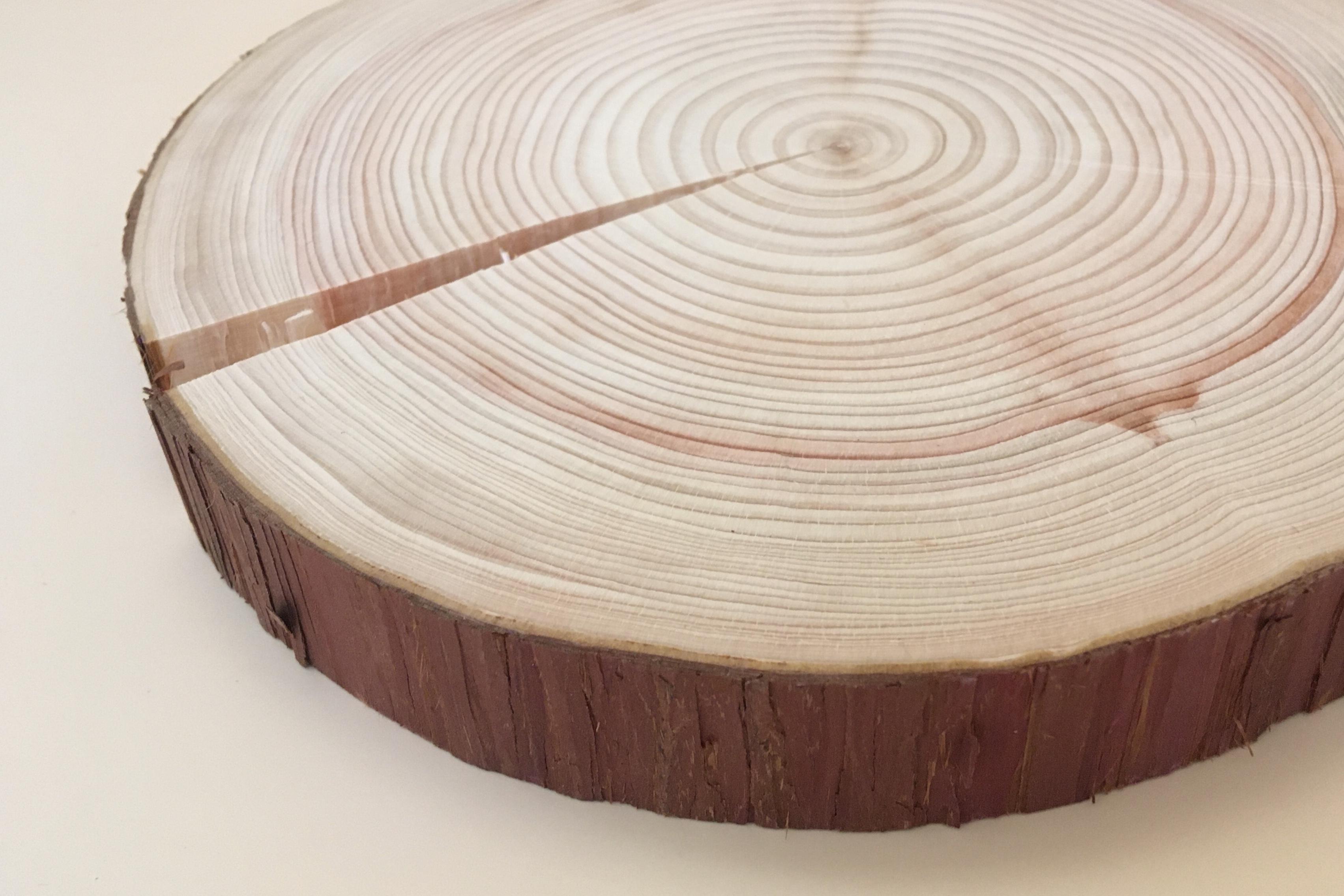 東京の木の「鍋敷き」